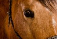 Sadie - Horseback riding in the arena at Foothills Farms December 2017