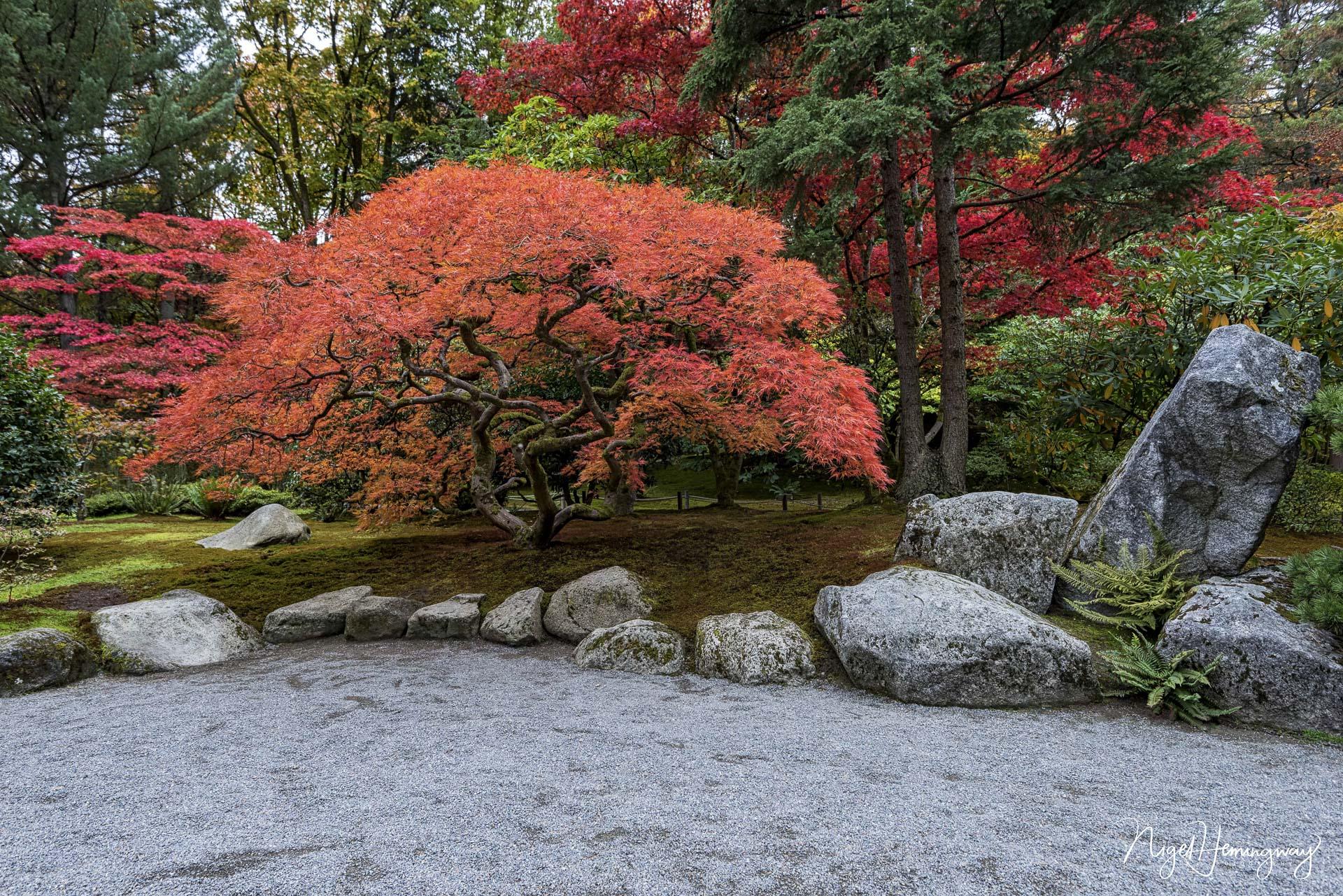 Fall Colour©Nigel Hemingway