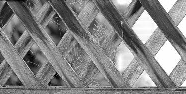 Webs On Fence - ©Virginia deBruyn