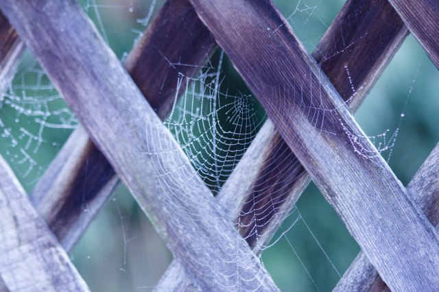Webs On Fence - ©Virginia deBruyn