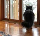 Mr Fluffy Enjoying The View - ©Derek Chambers