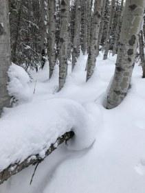 Swirls of Snow - ©Brenda Harvey-Jones