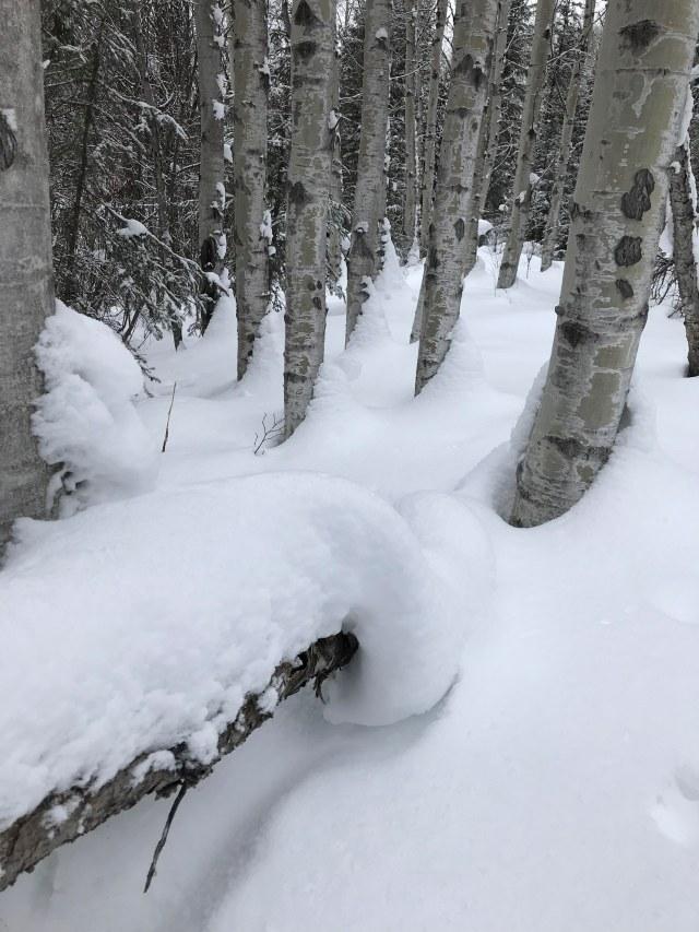 Swirls of Snow