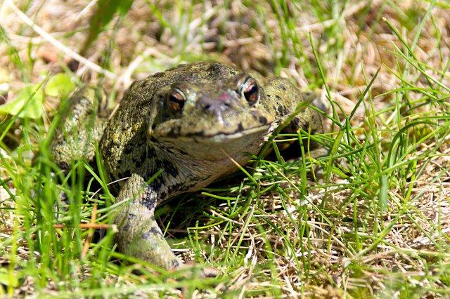 Froggy Went a Courtin' - Gloria Melnychuk