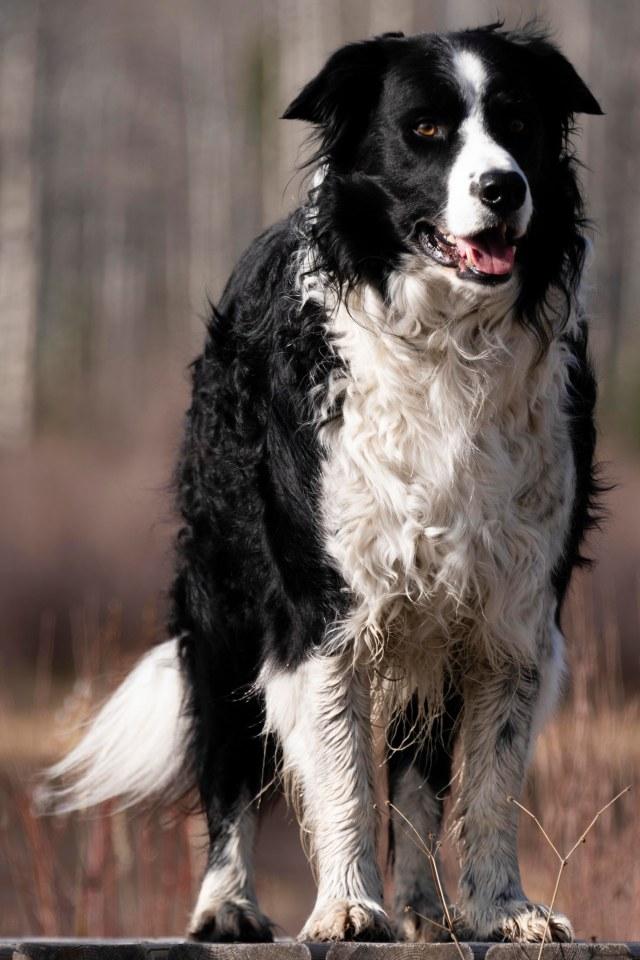 My Dog (2)