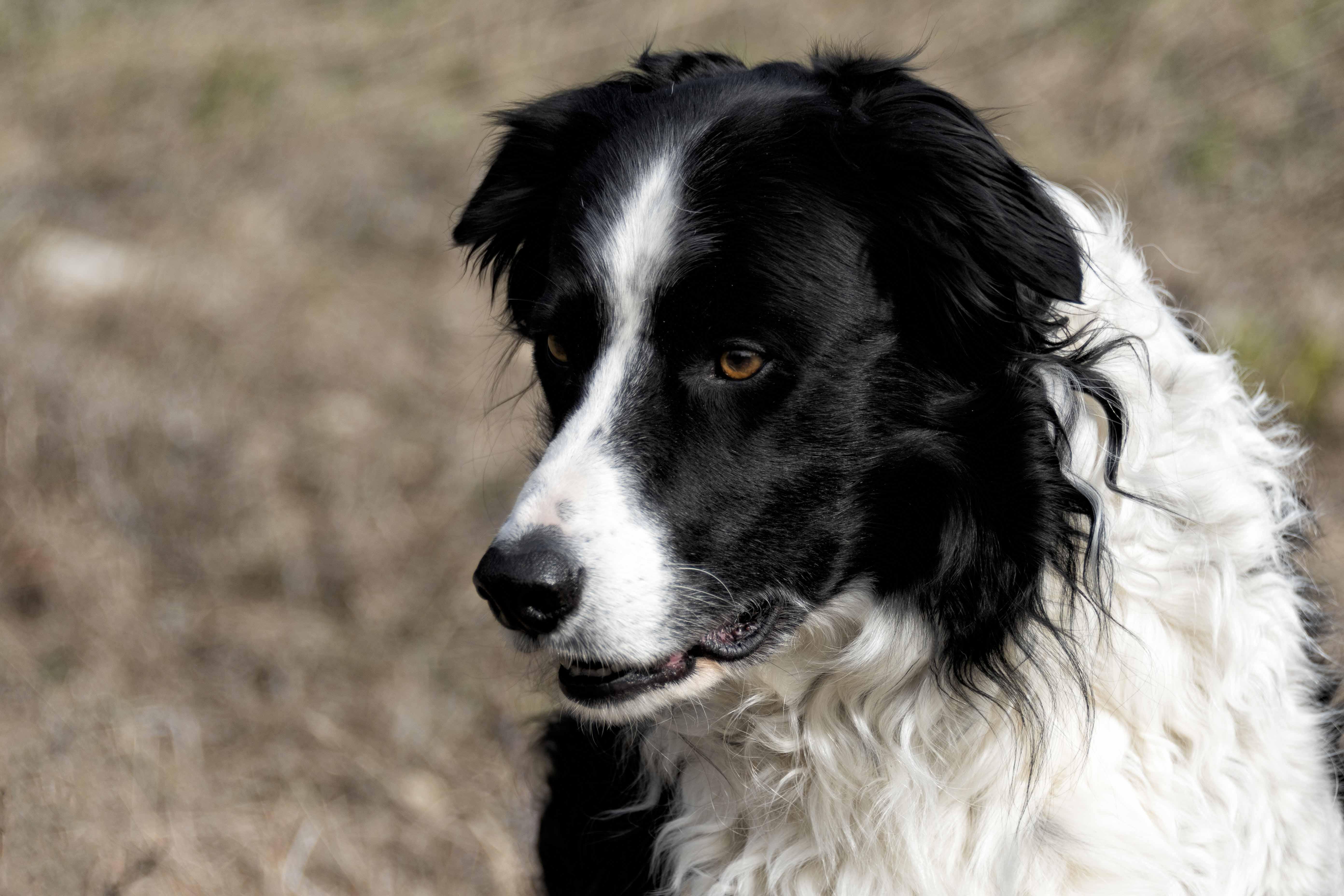 My Dog - Gloria Melnychuk