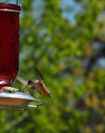 "Scavenger #38 - Bird ""Coming For Lunch"" - Kevin Haggkvist"