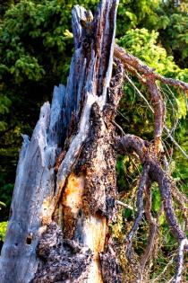 Stumps (2) - Bill Melnychuk
