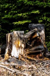 Stumps - Bill Melnychuk