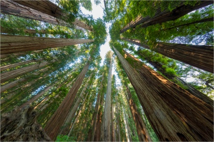 Redwoods, Jedediah Smith Redwoods State Park, CA - Derek Chambers