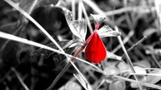 Leaf - Alamaz Durand