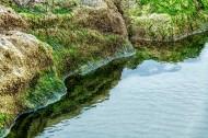 Bandon Tidal Pool - Larry Citra