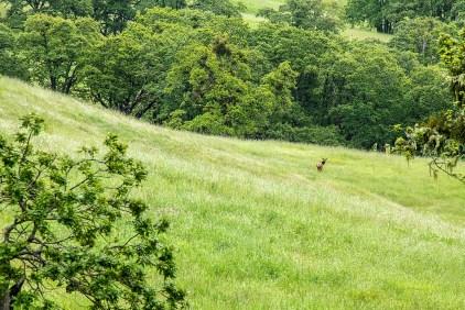 Lone Elk - Larry Citra