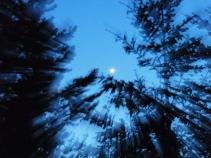 Scavenger #58 Movement - Motion Blur - Kevin Haggkvist