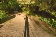 81-Shadows