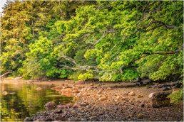 Burgoyne Bay 2 - © Larry Citra