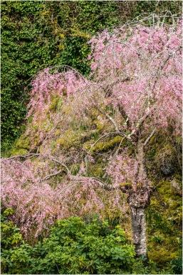 Butchart Gardens3 - Larry Citra