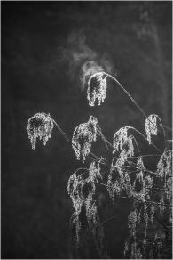 Morning Mist © Larry Citra