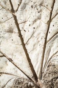 Scavenger Hunt-36-Concrete Leaf - Sharon Jensen
