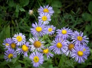 Scavenger Hunt #37 - Flowers ©Derek Chambers
