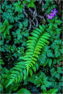 Spring © Larry Citra