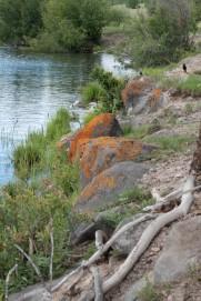 Waters Edge - Pamela Faiers