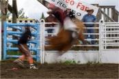 Bullrider In Motion - Daryl Bell