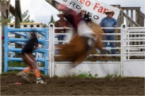 Bullrider In Motion - Daryl Bell