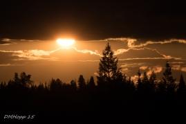 Sunset Silhouette -DMHopp