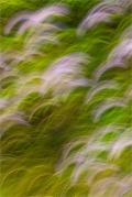 Meadow Grass and Asters © Larry Citra
