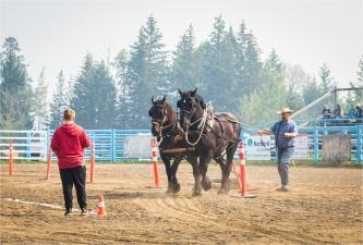 Heavy Horse-Log Pull - Interlakes - Sharon Jensen
