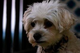 Scavenger hunt: A pet #1 - Tamara Isaac