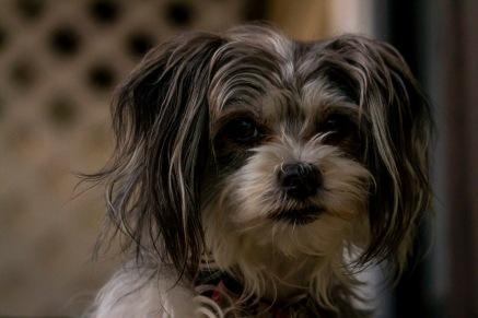 Scavenger hunt: A pet #2 - Tamara Isaac