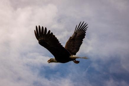 Scavenger hunt: Bird - Tamara Isaac