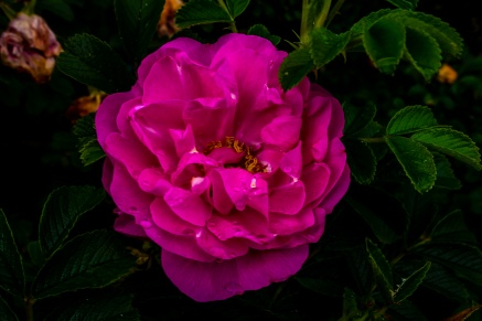 Scavenger hunt: Flowers - Tamara Isaac