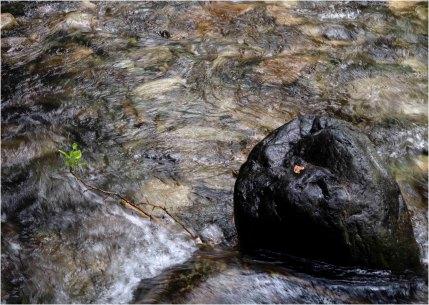 Life's Persistence - Eakin Creek Provincial Park - Derek Chambers