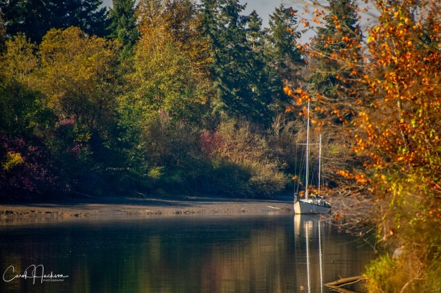 Fall Scene, Bedford Channel - Carol Jackson
