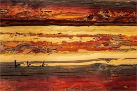 Old Logs-Old Nails - Sharon Jensen