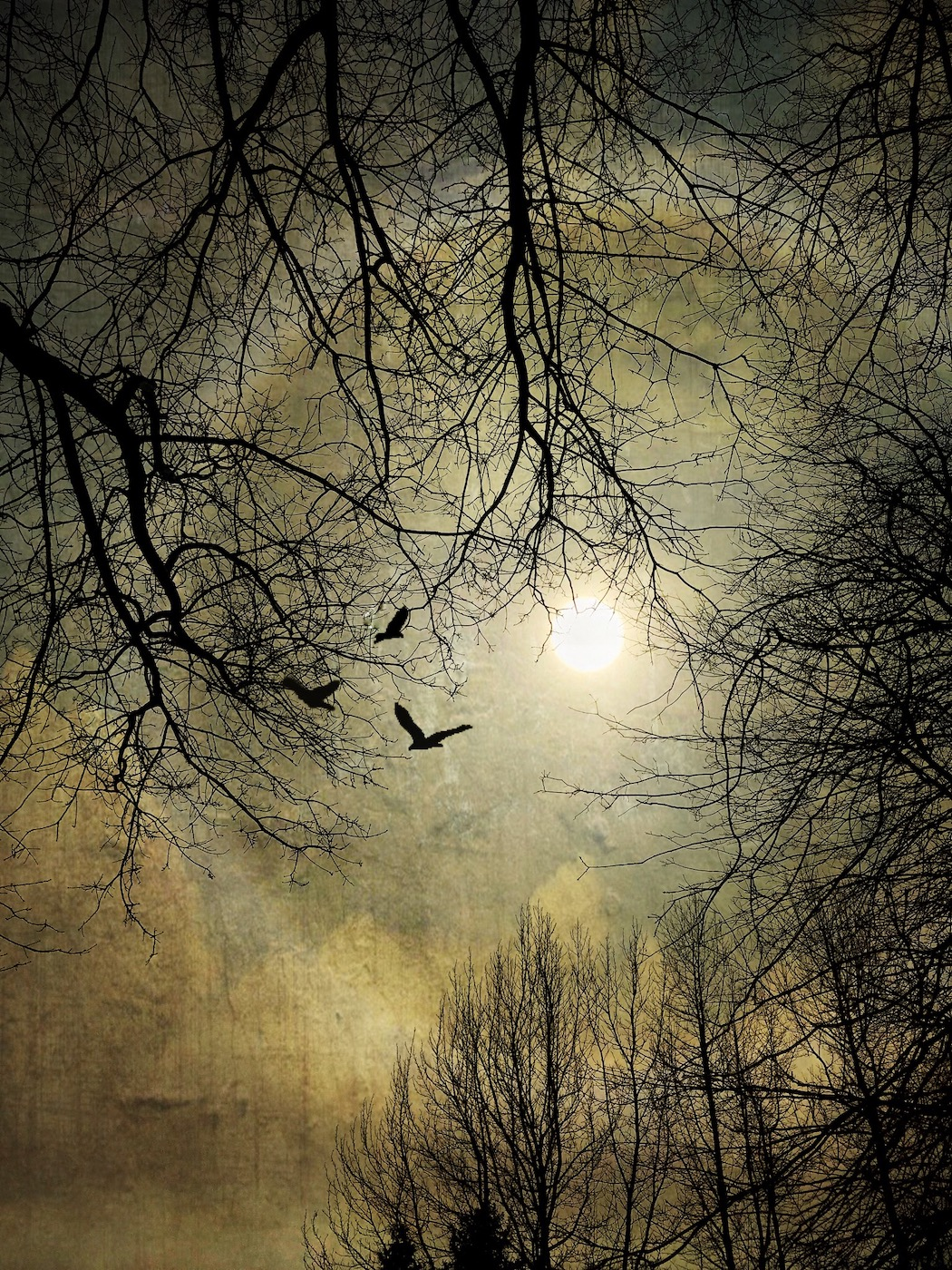 Sun Dog, Altered Reality - Carol Jackson