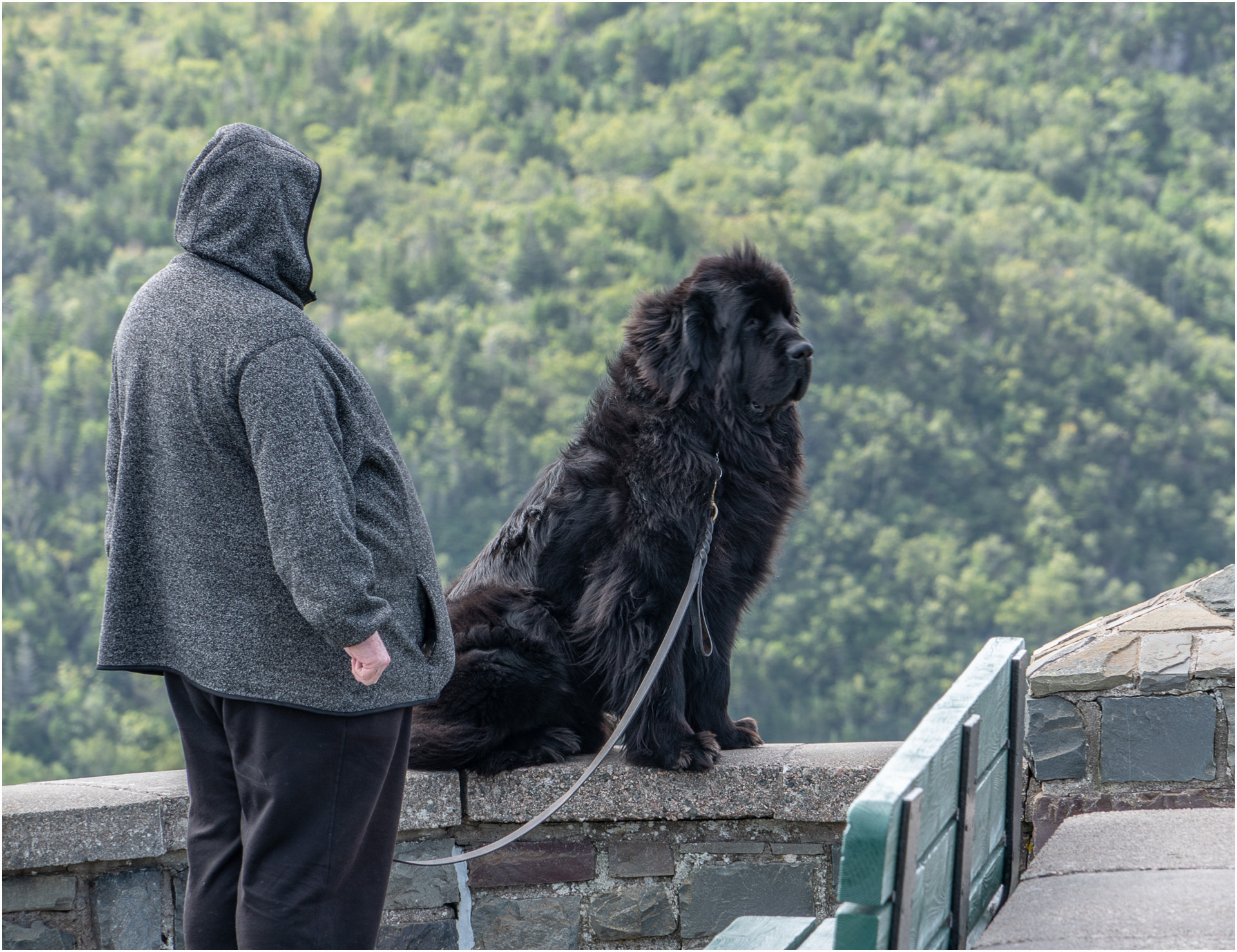 A Newfie and his Newfie, St John's, NL