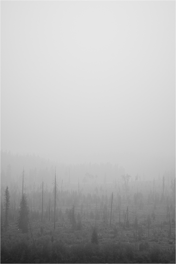 Despair - Daryl Bell
