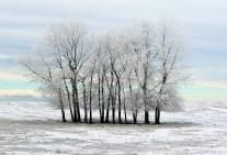 Hoar Frost 3 - Doug Boyce