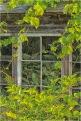 Vines from the Past at Tallheo © Gloria Melnychuk