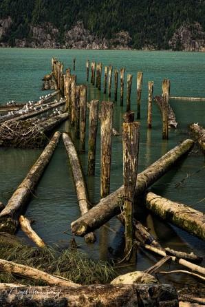 Bella Coola Harbour - Nigel Hemingway