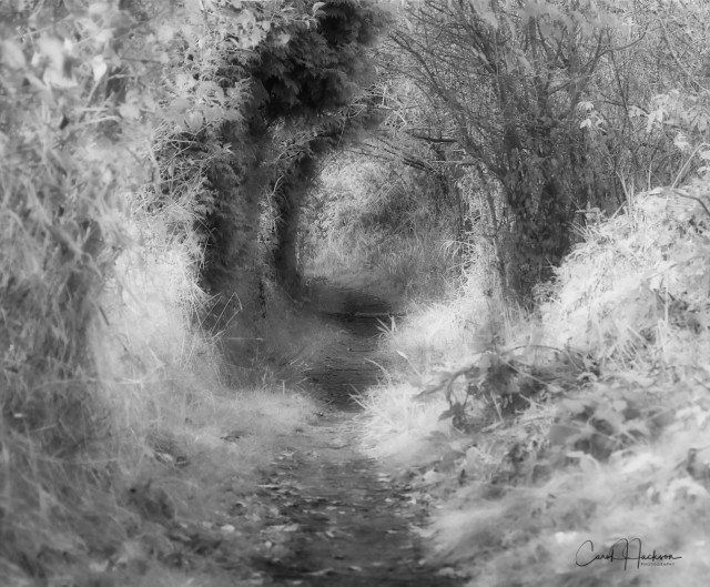 BW Tunnel-CJJ-