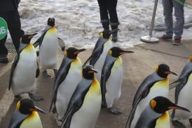 Emperor Penguin 1 - Doug Boyce