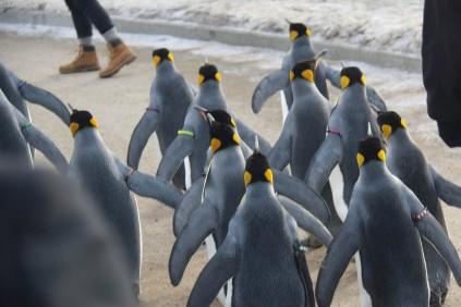 Emperor Penguin 3 - Doug Boyce
