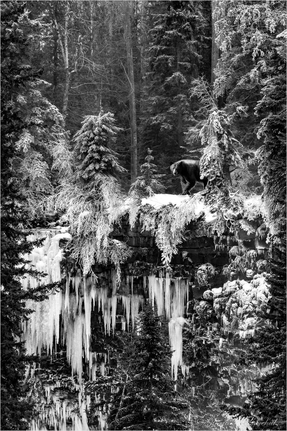 Mahood Falls Bear ©Gloria Melnychuk