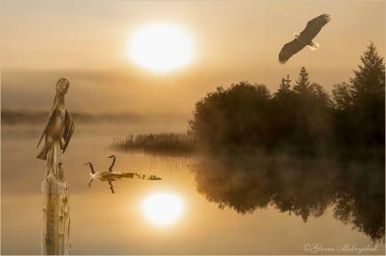 Misty Morning ©Gloria Melnychuk - 405-012