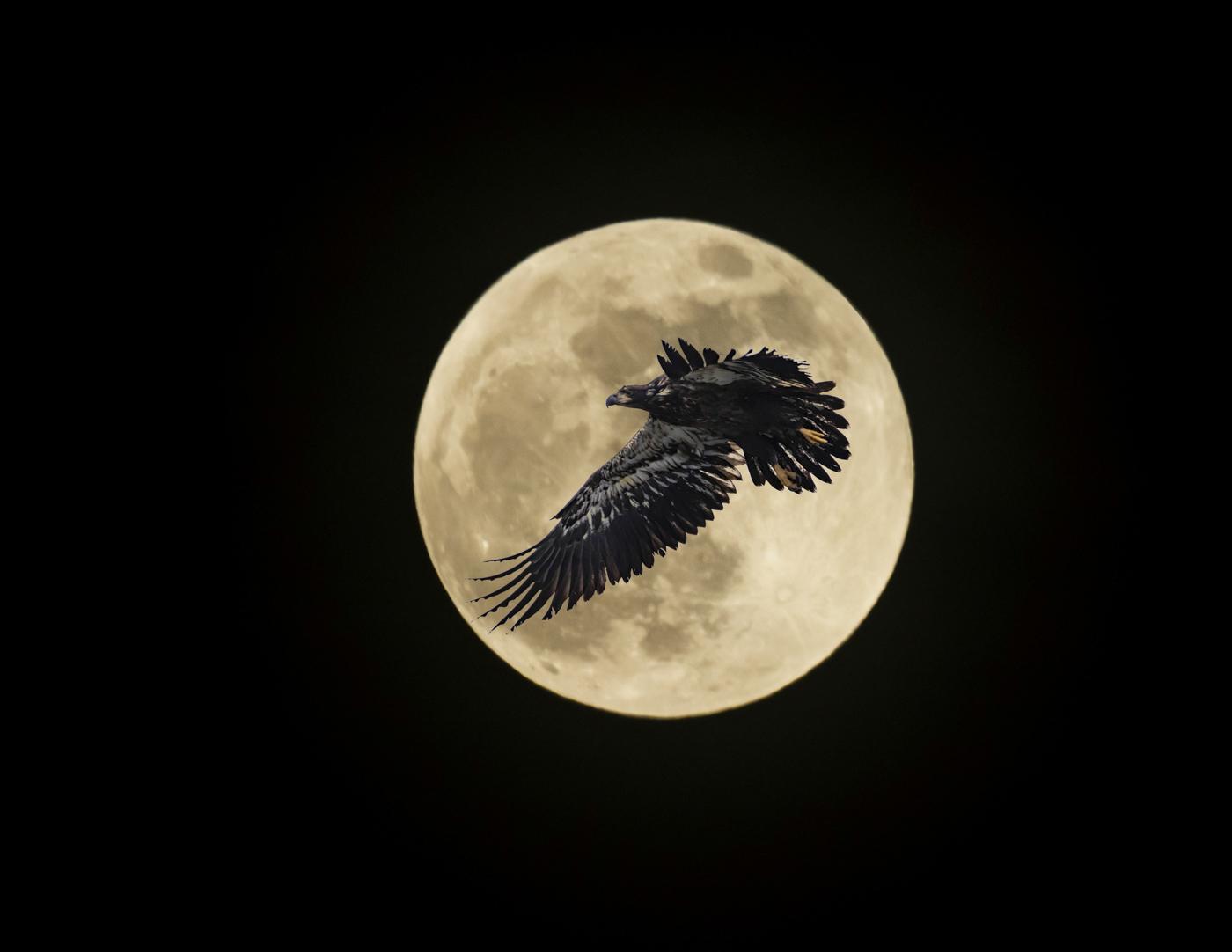 Moon and Eagle